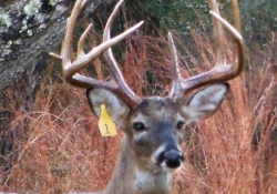 Twisted Tine Ranch Deer